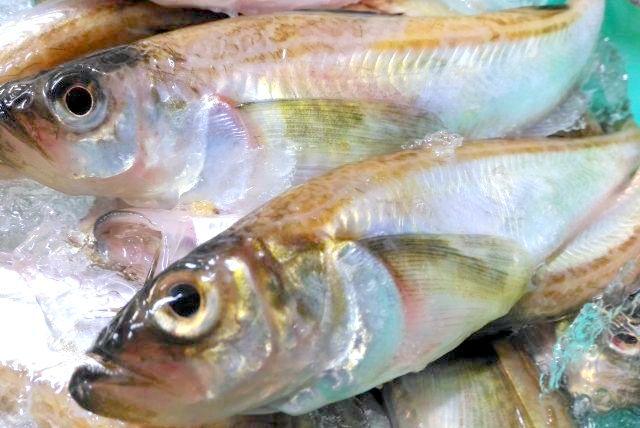 <おいしい情報をお届けするコラム>質問です!日本のソウルフード「魚の発酵食品」といえば何が浮かびますか?